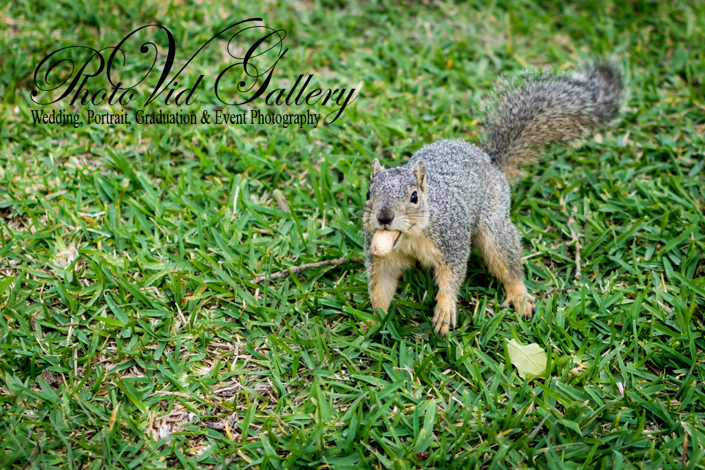 Squirrels Posing for our Nikon 35mm 1.8G